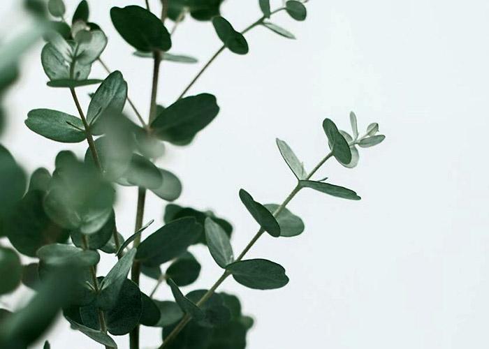 12 Растений, которые отталкивают надоедливых комаров