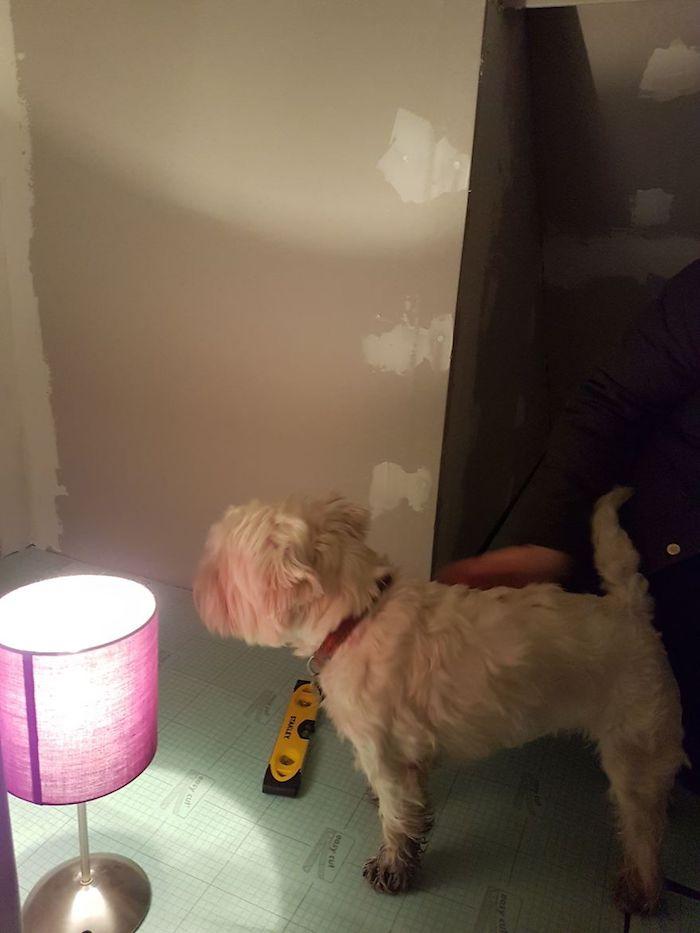 Как сделать комнату для собаки