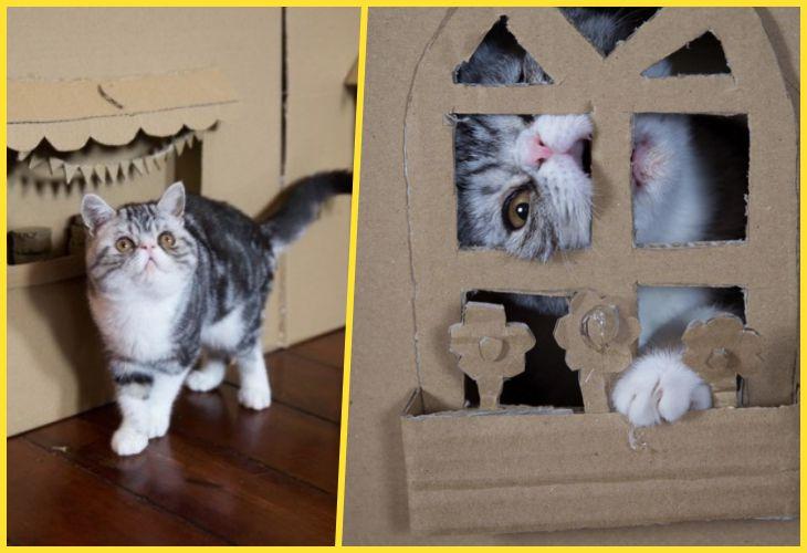 30 Домиков для кошек, которые можно сделатьсамостоятельно
