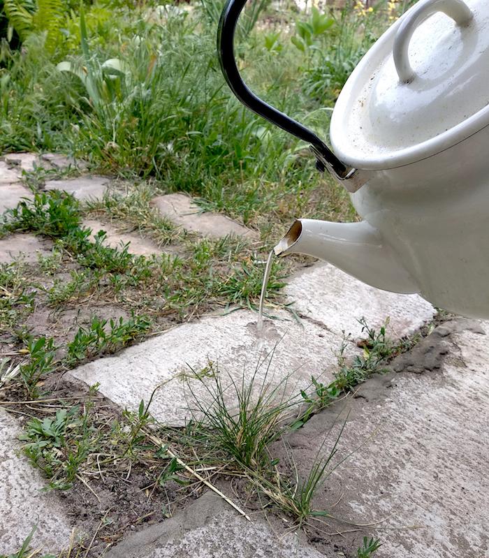 10 способов избавиться от сорняков
