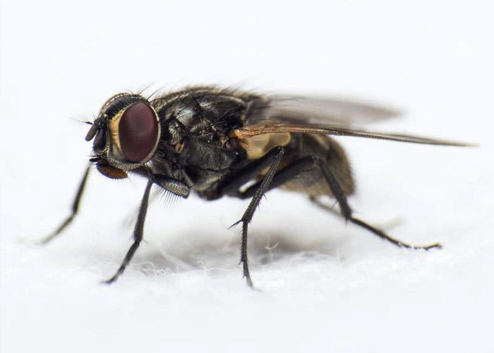 6 Способов избавиться от надоедливых мух в доме