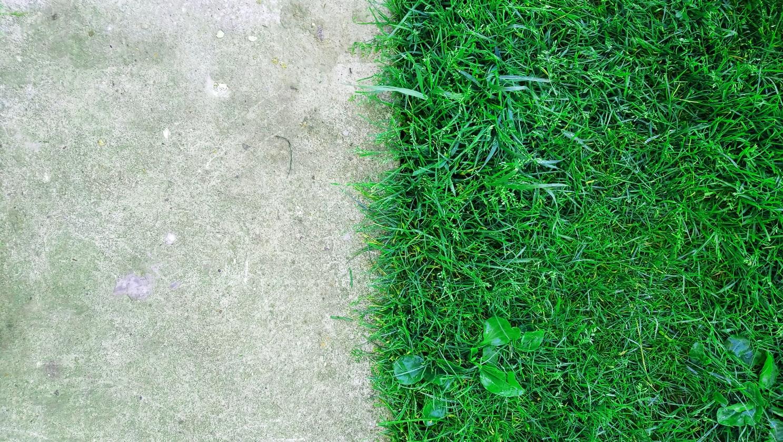 11 Ошибок, которые могут убить ваш газон