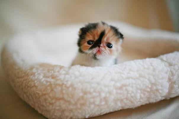20 Милых детишек животных