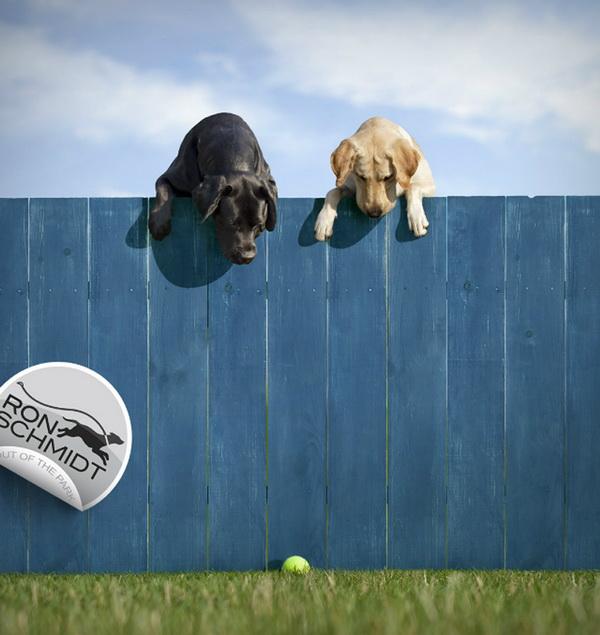 Удивительные снимки собак {Ron Schmidt}