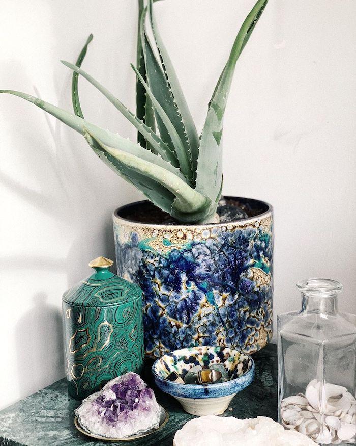 13 Популярных комнатных растений, токсичных для кошек и собак