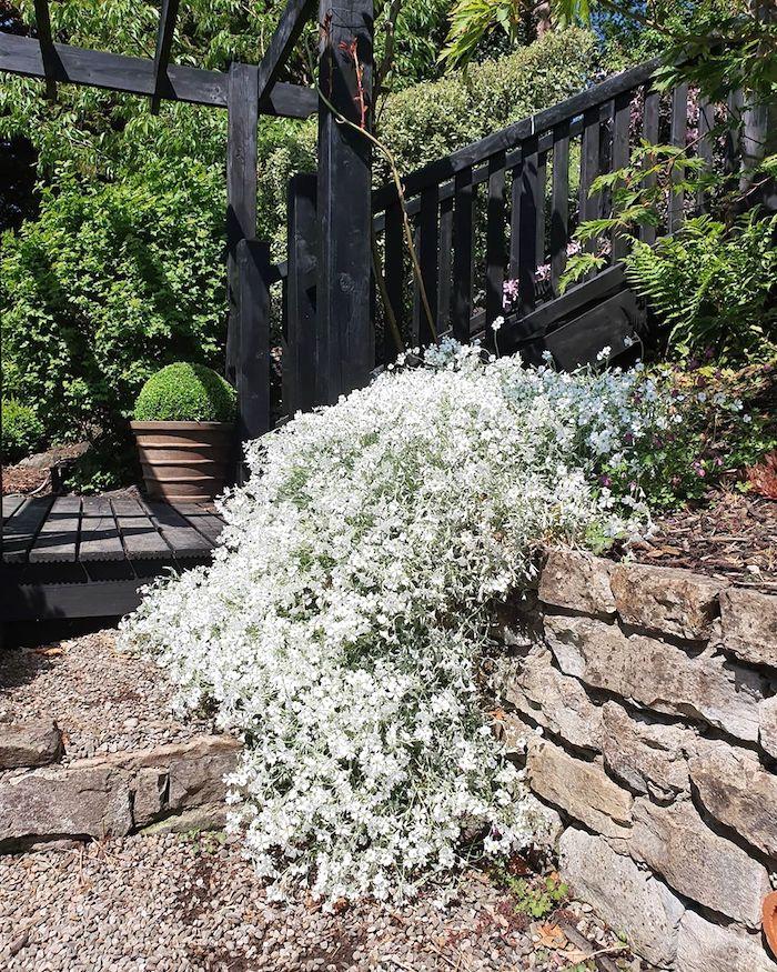 10 Лучших растений для каменистого ландшафта