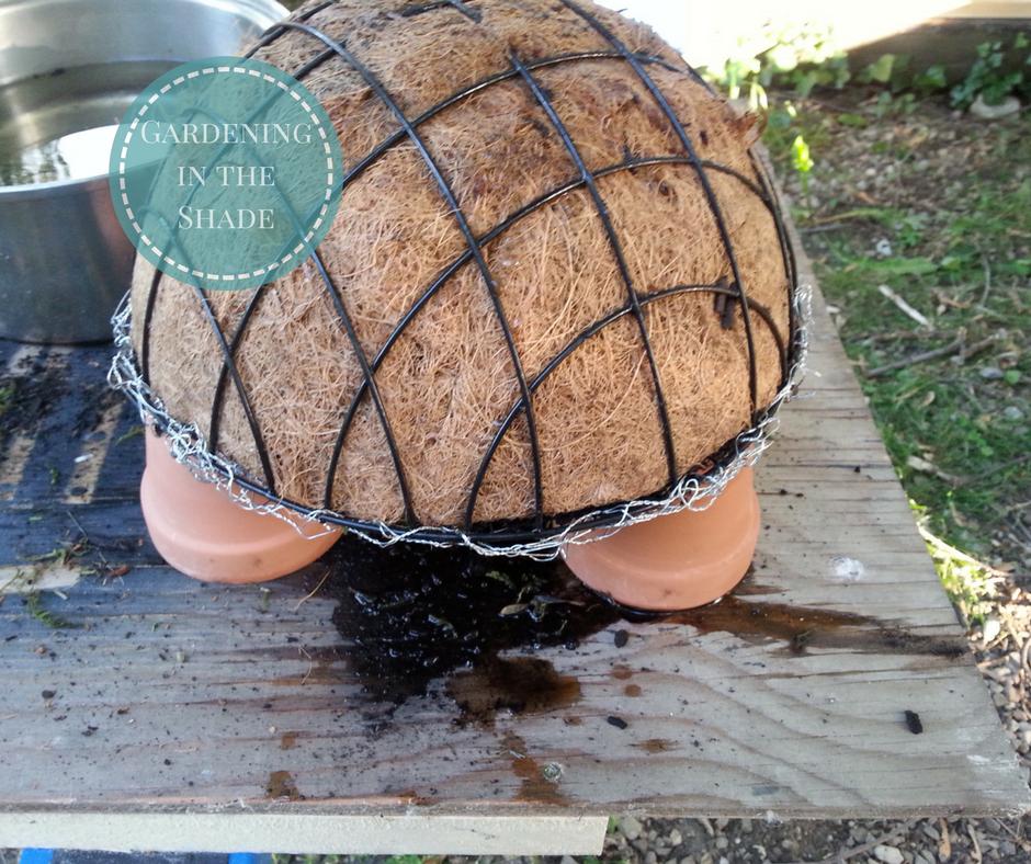 Восхитительная черепаха из суккулентов