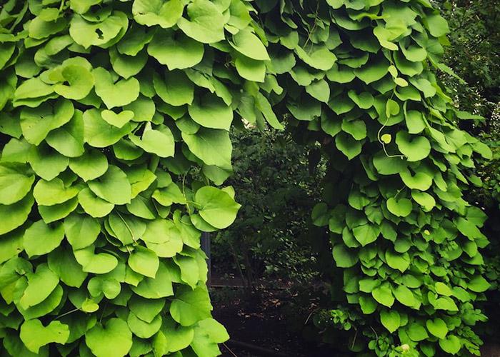 20 Растений, которые смогут выжить без солнца