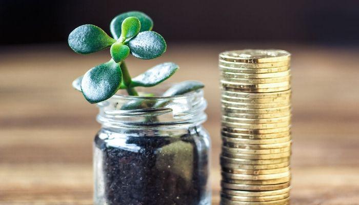 Деньги, монеты и денежное дерево, привлекает финансы, удачу, успех
